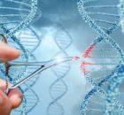 Recherche : L'Estonie encourage sa population à donner leur ADN